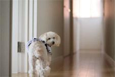 愛犬も安心のフロアコーティング